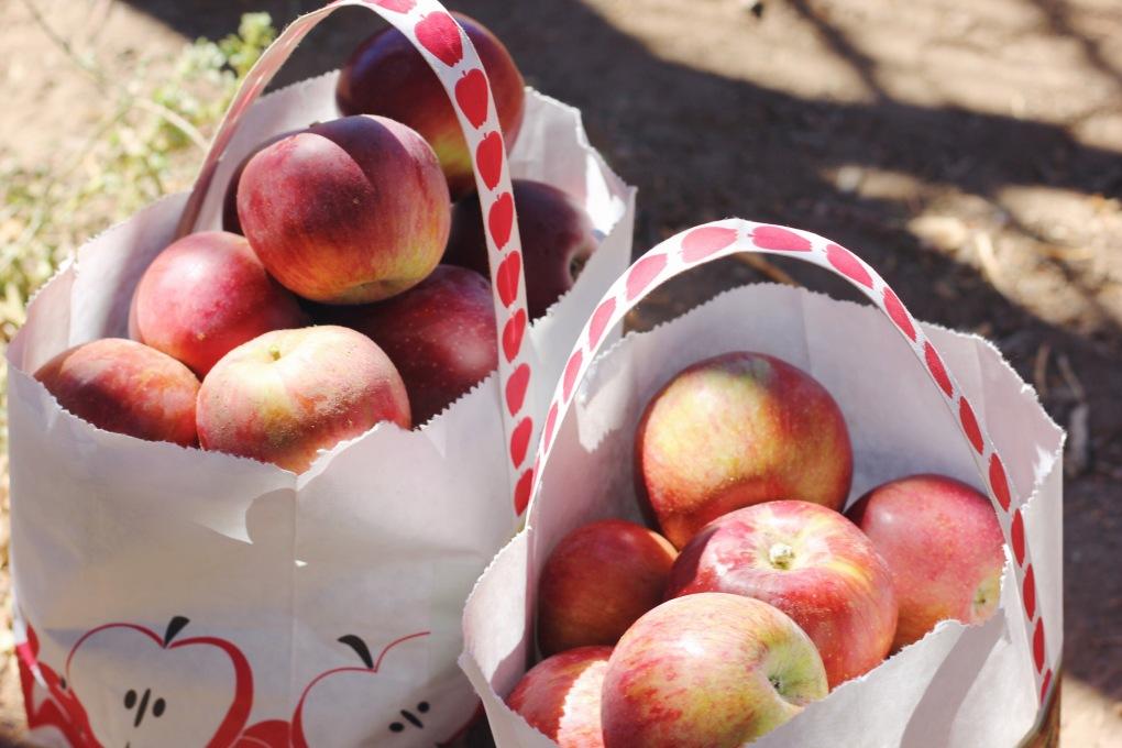 Huerto de manzanas en Julian