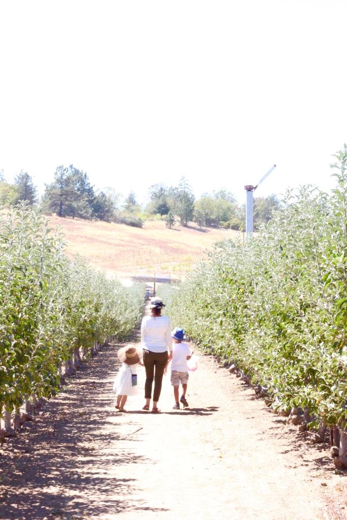 Huerto de manzanas. Apple picking with kids