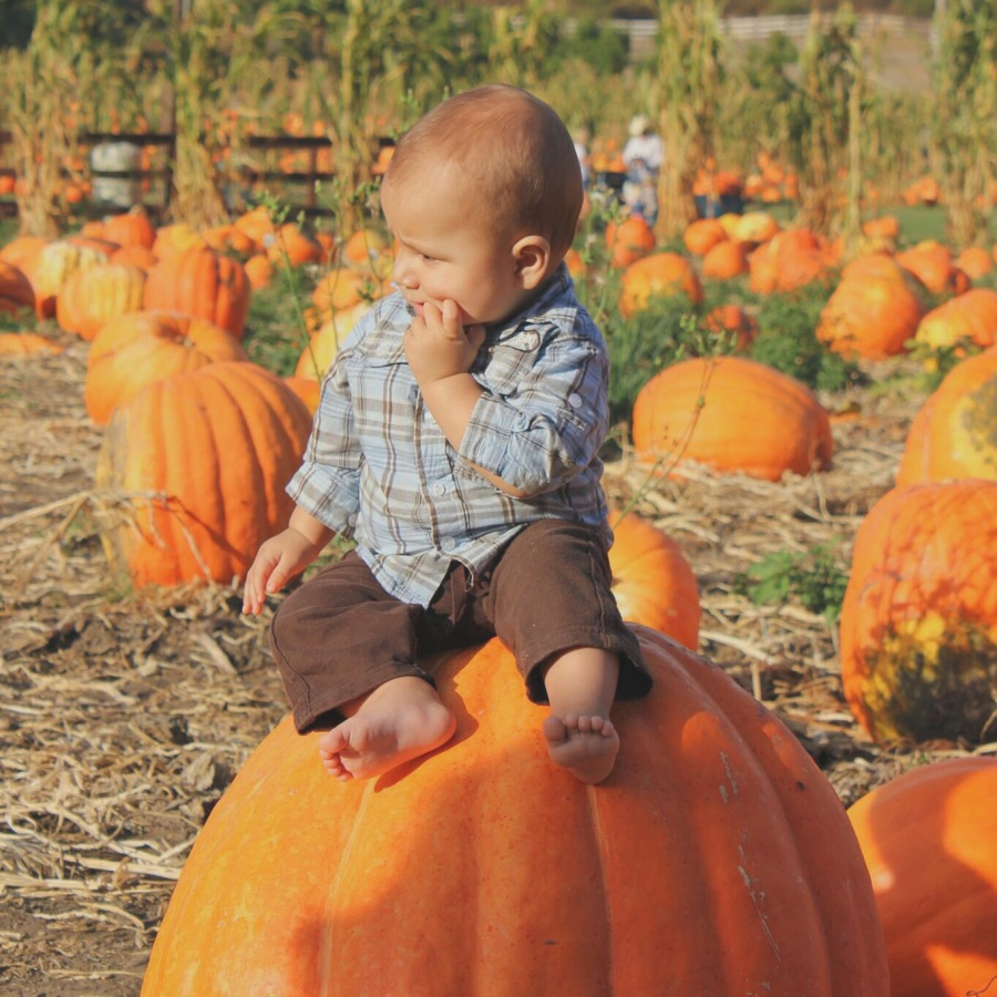 pumpkin patch aprendiendo con mama
