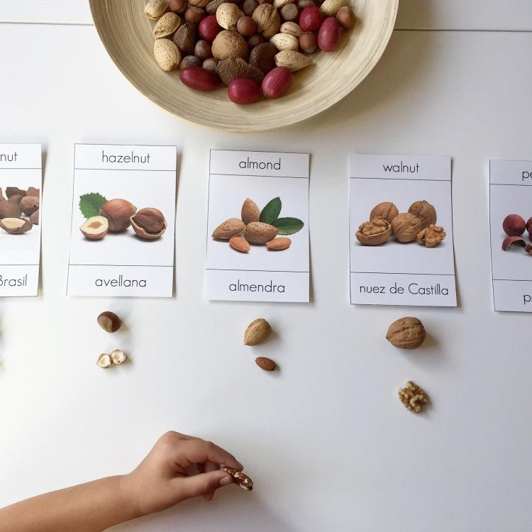Montessori 3 part cards Nuts - nueces bilingual