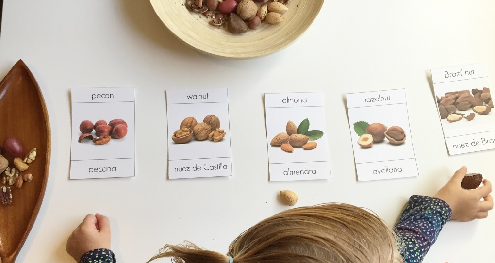 3 part cards montessori bilingual cards nuts nueces