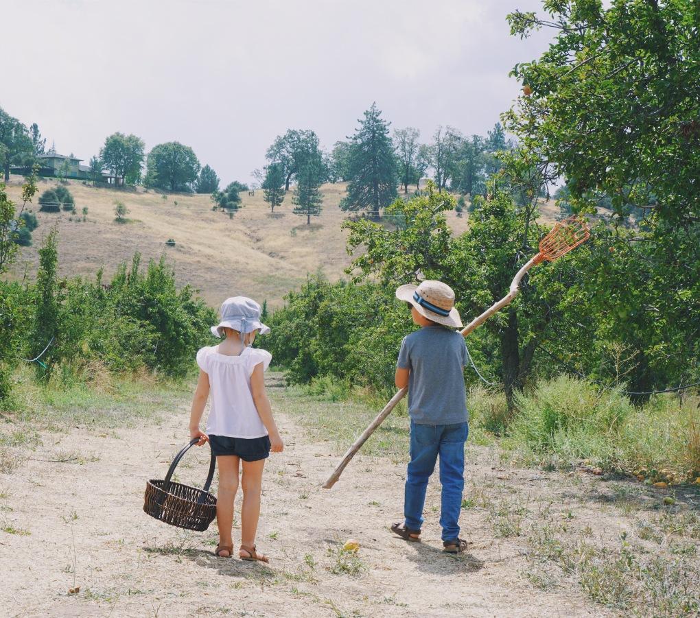 huerto de manzanas con niños
