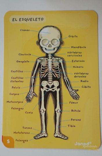 Aprendiendo sobre el Esqueleto
