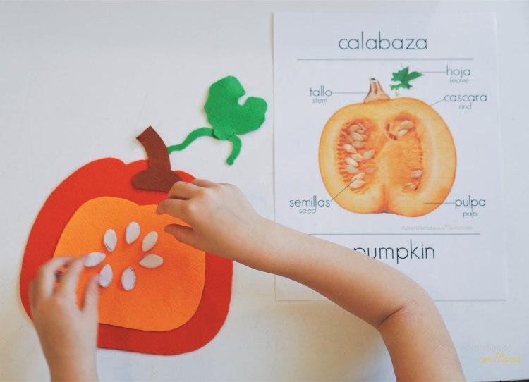 Tarjetas Montessori ciclo de vida calabaza preescolar actividades para niños imágenes reales